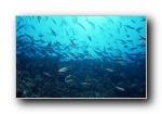 海底世界-鱼群下集
