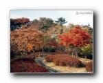韩国秋季壁纸