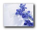 紫罗兰(多分辨率)