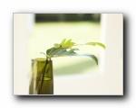 室内绿色摆设壁纸(宽屏)1600*1200