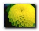 日本风光与花卉系列精选壁纸