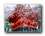日本京都美景